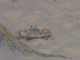 MORE CRABS!!!!!!!!!! by Jaws1996