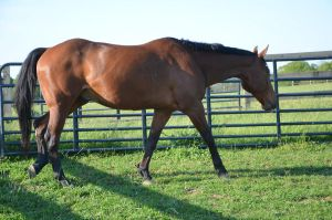 warmblood7 by Spotstock