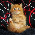Little orange furry ball by ZoranPhoto