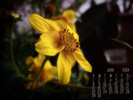Free June 2014 Shawna Mac Desktop Calendar by ShawnaMac