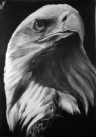 Eagle by Macca4ever