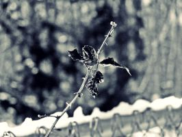 Winter Growth II by DaBerry