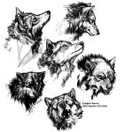 Wolves 10-19 by teagangavet
