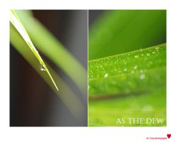 as the dew by hohe