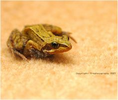 Frog On The Carpet by ERSPhotography