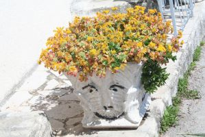 funny plant arrangement closer by ingeline-art