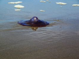 Beached Jelly 4 -- Sept 2009 by pricecw-stock
