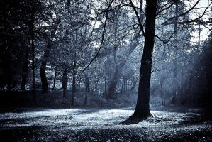Cold autumn by Snowflake20