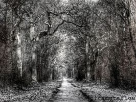Dark forest... by cameraflou