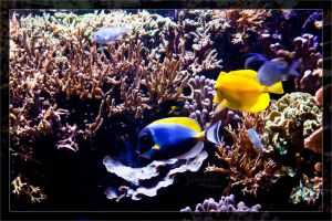 Fishes at the reef-tank by deaconfrost78