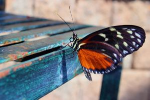 Hecale Longwing Butterfly by ParadoxGirl411