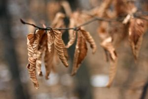nature 0140 leaf by remigiuszScout