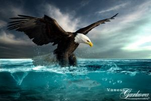 Eagle by vanesagarkova