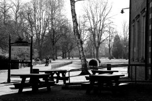 Picture of the park by steflizz