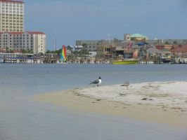 Pcola Boardwalk and birds by blacklacestock