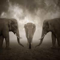 Elephant whisperer by Alshain4
