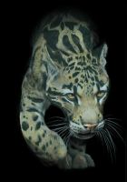 Clouded Leopard by silvercrossfox