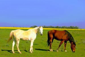 Horses by OPTILUX