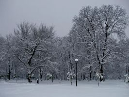 winter white silence by danamis