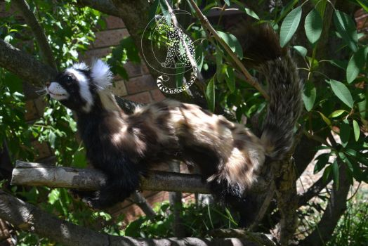 Marbled Polecat 3 by Moon-Leopard-Designs
