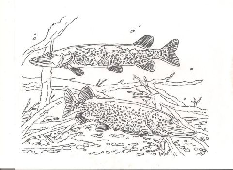 northern pike by countrygirllover
