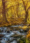 Mcgee Creek by tassanee