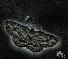 Outer space moth... by virnagray