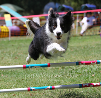 AKC Agility Trial 8 by Deliquesce-Flux