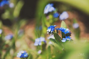 blue beauty by Blanchii