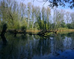 neat swamp by tanja1983