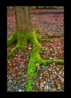 Forest II by neoweb