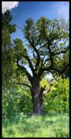 The Ancient Oak by Hluthvik