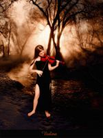 Violino by Flore-stock