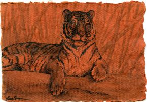 tiger in india ink by LisaCrowBurke