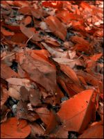 Red Leaves on the Ground by devianb