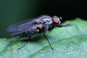 The Fly 02 by s-kmp
