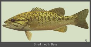 Small-mouth-Bass by GraphicDream