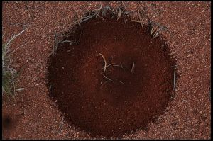 enso of the ants by pathworking