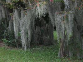Halloween tree with moss stock by adivawoman