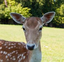 Deer 260611 2 by New-Dawn-Productions