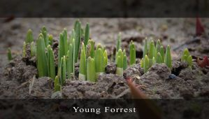 Young Forrest by Mayones
