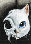 White Cat Skull by sobeyondthis