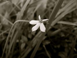white star by 08brooky80
