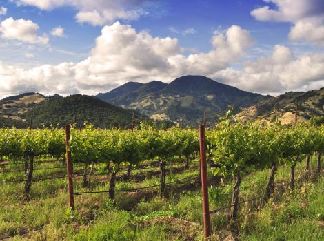 Spring Calistoga Vineyard by stock-pics-textures