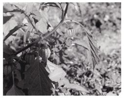0910pods by PaigeC