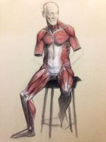 Artistic Anatomy Muscled Figure by Quackamos