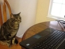 Computer Cat by november123456789066