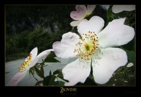 Spring of youth by Neshom