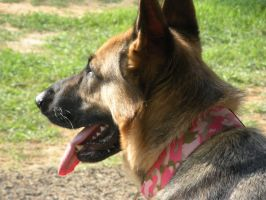 Coco 3 - GSD stock by kingy9467