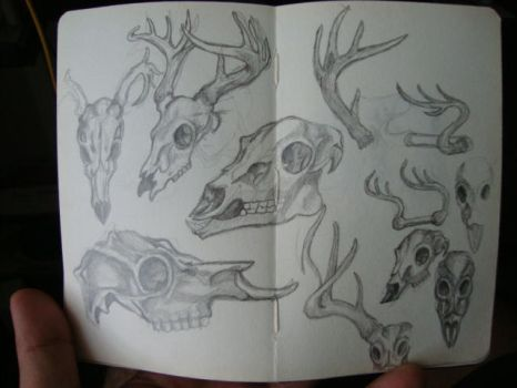 Deer skull studies for some future project by Gabstronomy
